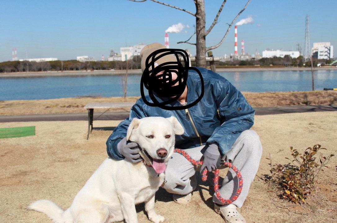 大型犬の魅力
